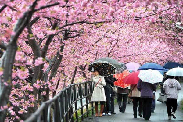 4 Chiến lược SEM nắm bắt nhu cầu du lịch mùa xuân